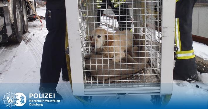 Dierenmishandeling: schipper laat hond bij vrieskou alleen aan dek