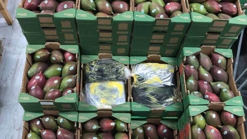 Het HARC-team trof in 2019 drugs aan tussen vaten fruitpulp, maar ook tussen ladingen mango's en meloenen. (Foto OM.nl)