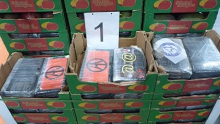 Een partij tussen mango's verstopte cocaïne. (Foto OM Rotterdam)