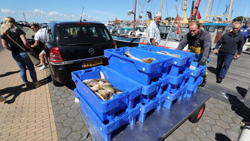 Na aankomst in de haven worden de paar honderd kilo baars naar de visafslag gereden. (Foto Bram Pronk)