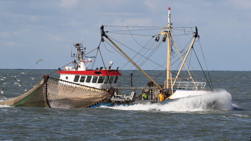 De garnalenvisserij leed vorig jaar een miljoenenverlies. (Foto Bram Pronk)