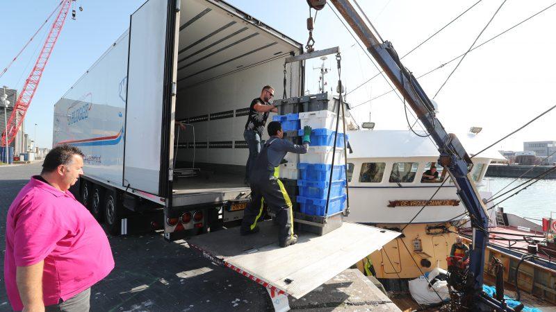 De vis van de ARM-15 De vrouwe Jannetje wordt in IJmuiden in twee vrachtwagens geladen voor transport naar Scheveningen onder toeziend oog van de schipper in de brug en de chauffeur (links). (Foto Bram Pronk)
