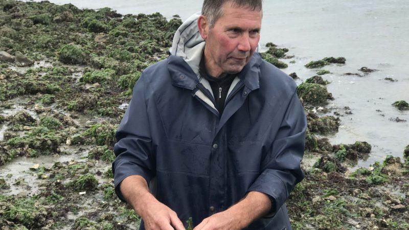 Om het gebruik van zeewier te promoten, struint Jan regelmatig met leerlingen van kookscholen over de ondergelopen keien van de dijk van Yerseke. (Foto Erik van Huizen)