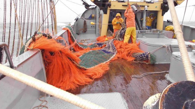 Relatief veel kotters vissen meer dan de helft van het jaar op vertrouwde bestekken. (Foto W.M. den Heijer)