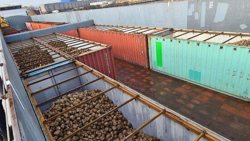 Op Barge Terminal Born in Limburg zijn deze week de eerste containers met suikerbieten op een binnenvaartschip geladen.
