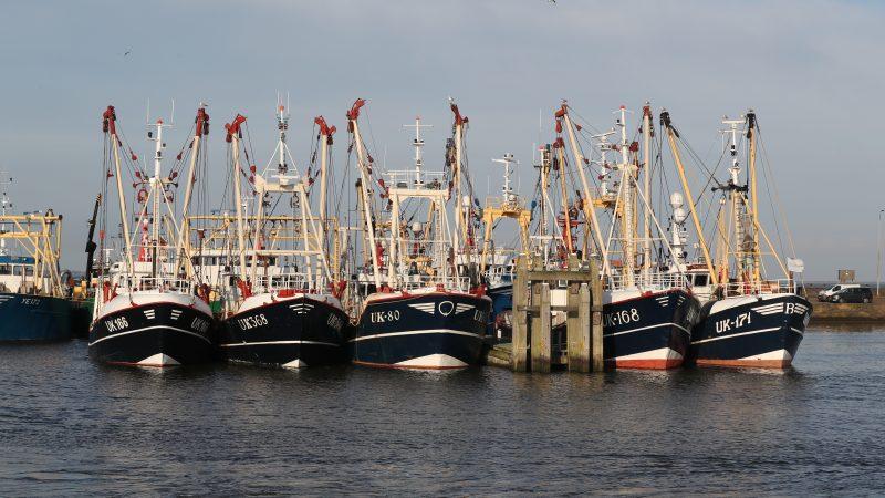 De garnalenkotter UK-171 lag afgelopen weekend nog rechts aan de buitenkant afgemeerd in de haven van Lauwersoog. (Foto Bram Pronk)