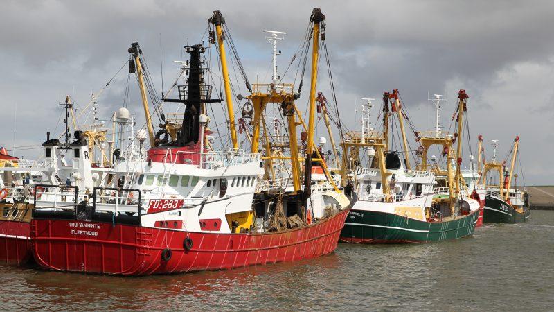 Harlingen is de thuishaven van een groot deel van de Urker kottervloot. (Foto Bram Pronk)