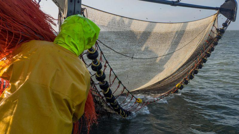 In de Wnb-vergunning werden de visuren al in 2017 vastgelegd. Daar moeten de garnalenvissers nu niet meer over klagen, vindt de rechter. (Foto Vissersbond)