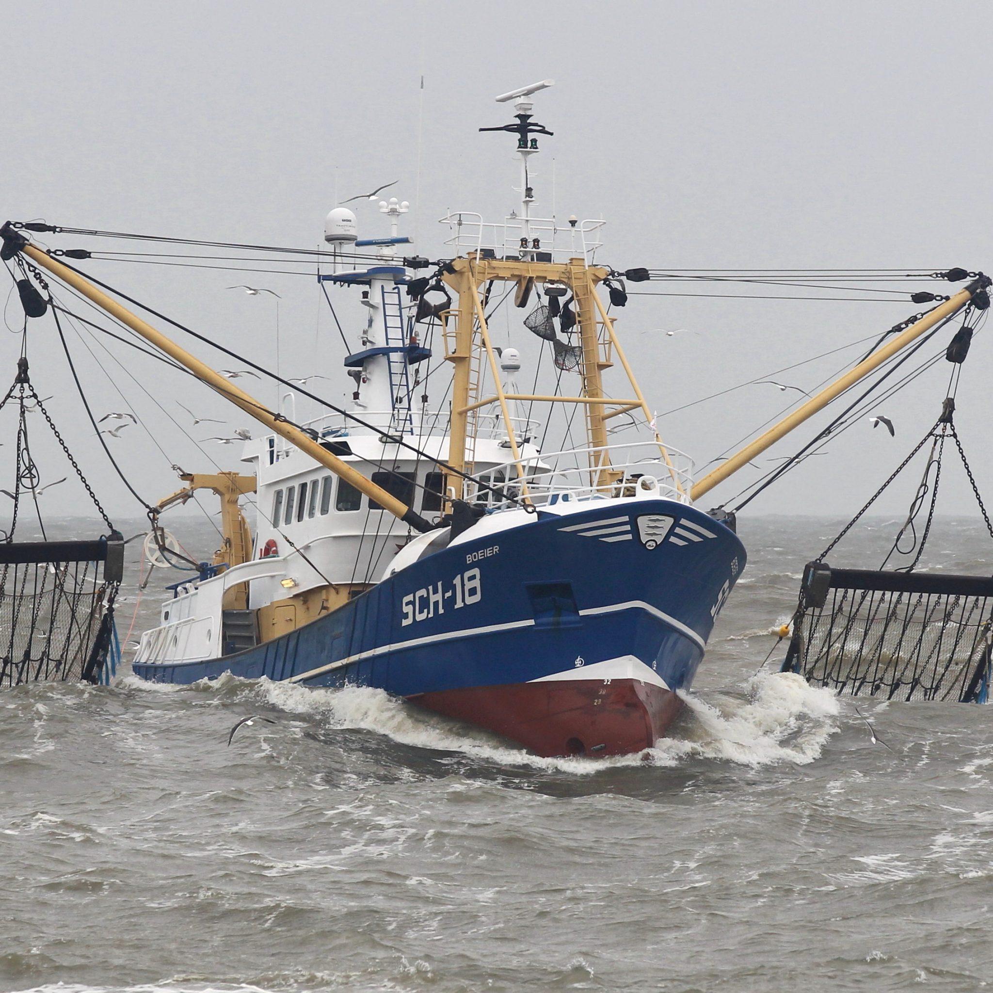 Een deel van de pulsvissers heeft recht op compensatie. (Foto Bram Pronk)