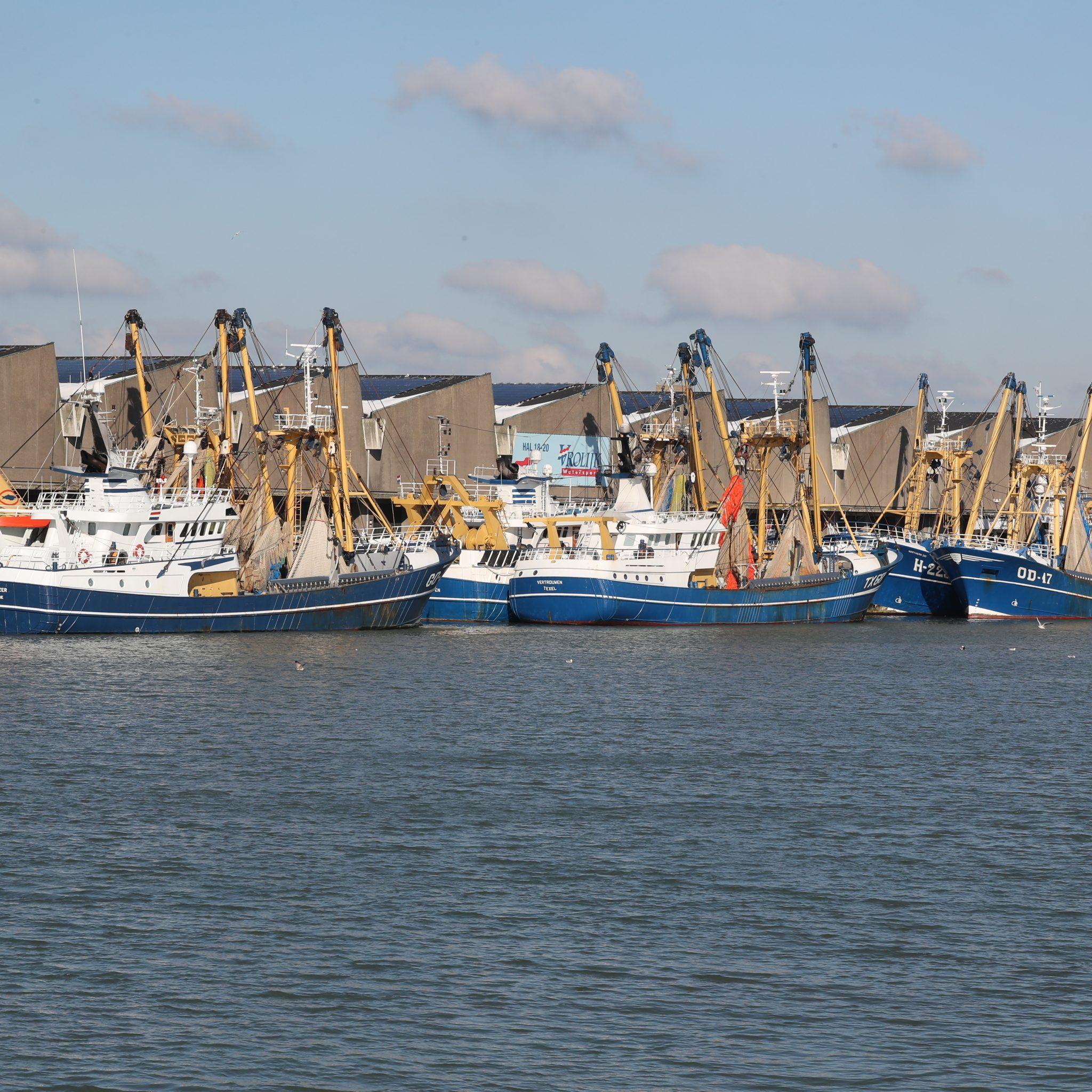 Een deel van de kottervloot uit Stellendam kiest voor Scheveningen vanwege het winterweer. Foto Bram Pronk