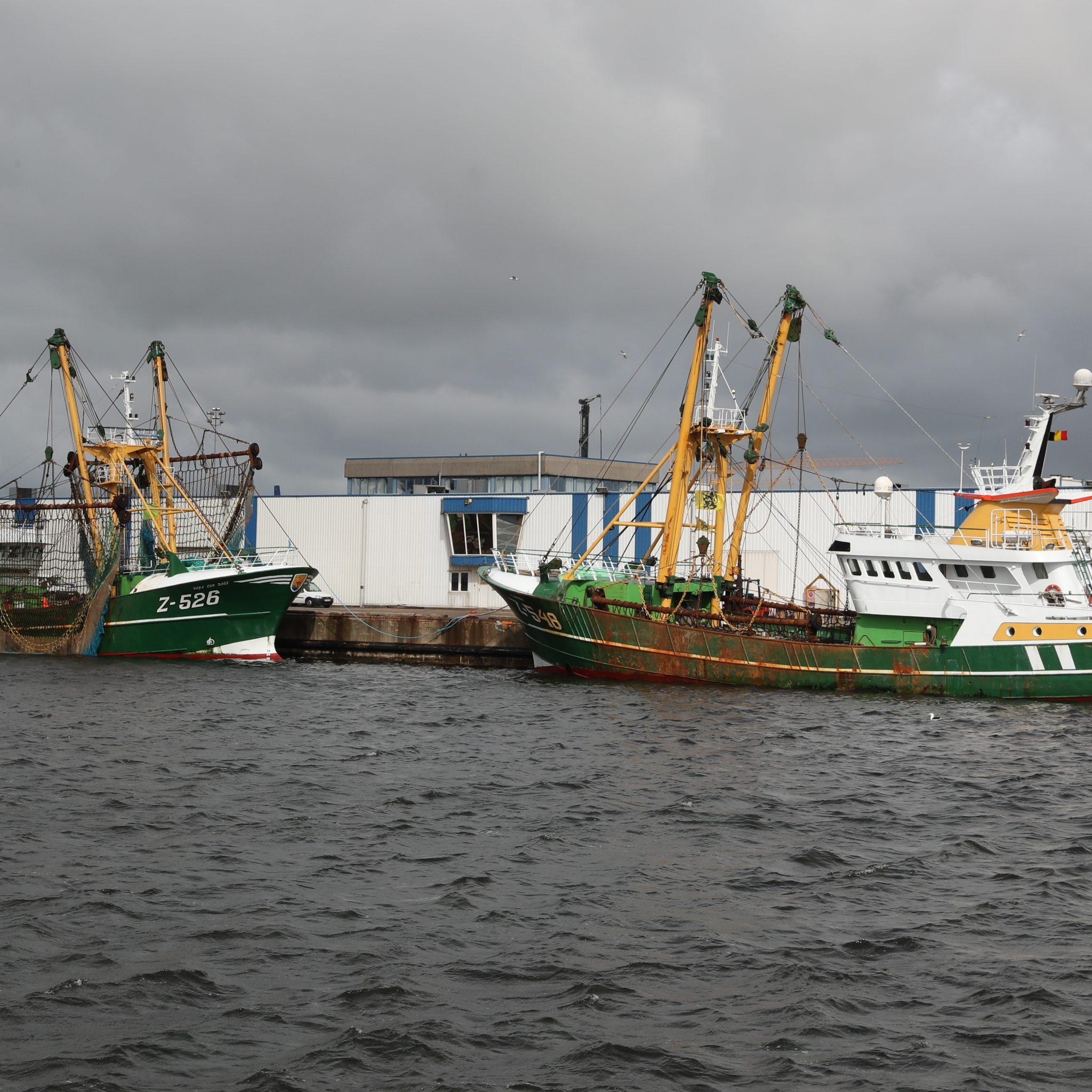 Twee grote Belgische bokkers langs de aanvoerkade van de Zeebrugse Visveiling in Zeebrugge. (Foto Bram Pronk)