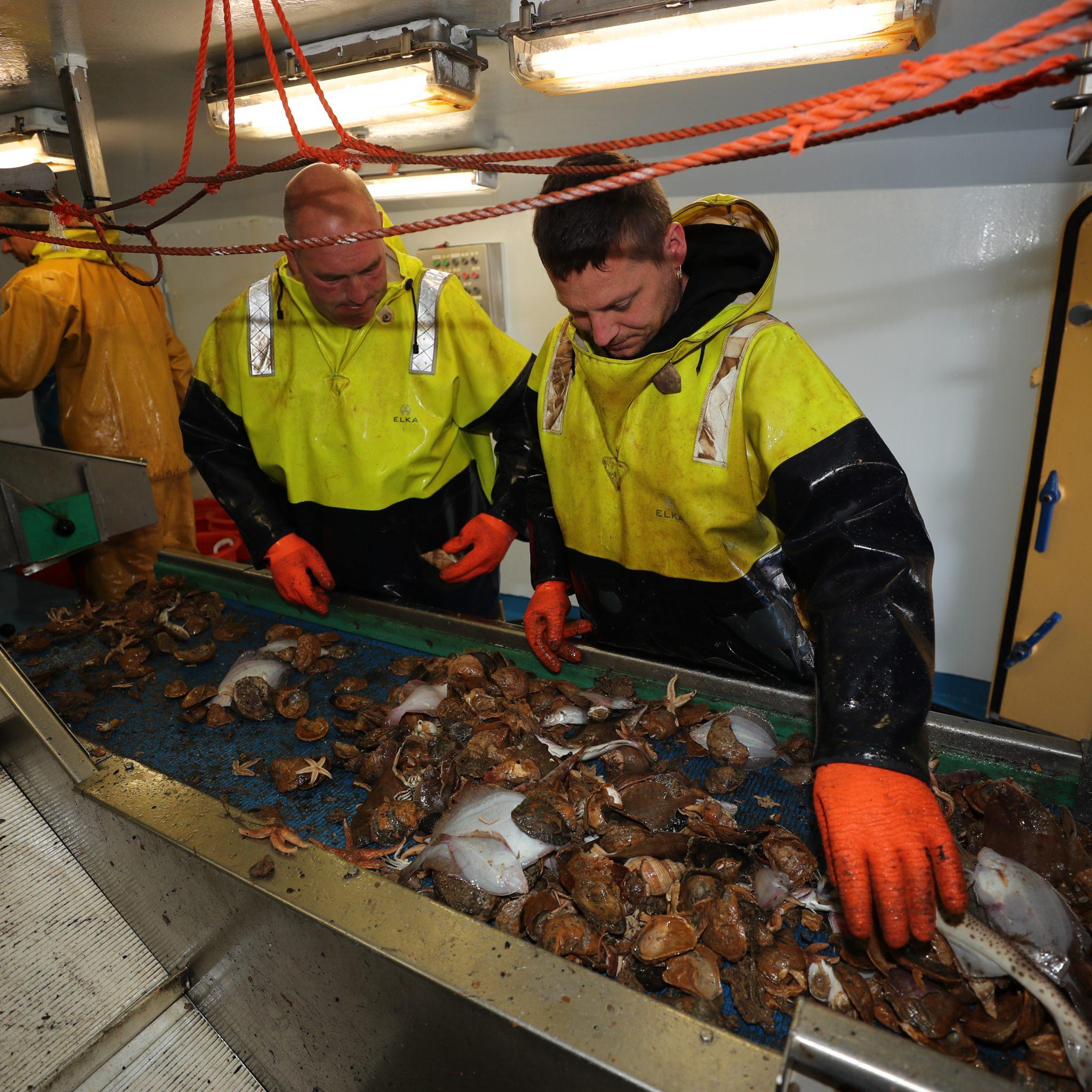 Controleurs kunnen straks op afstand alle (ondermaatse) vis zien die uit het net komt. (Foto Bram Pronk)