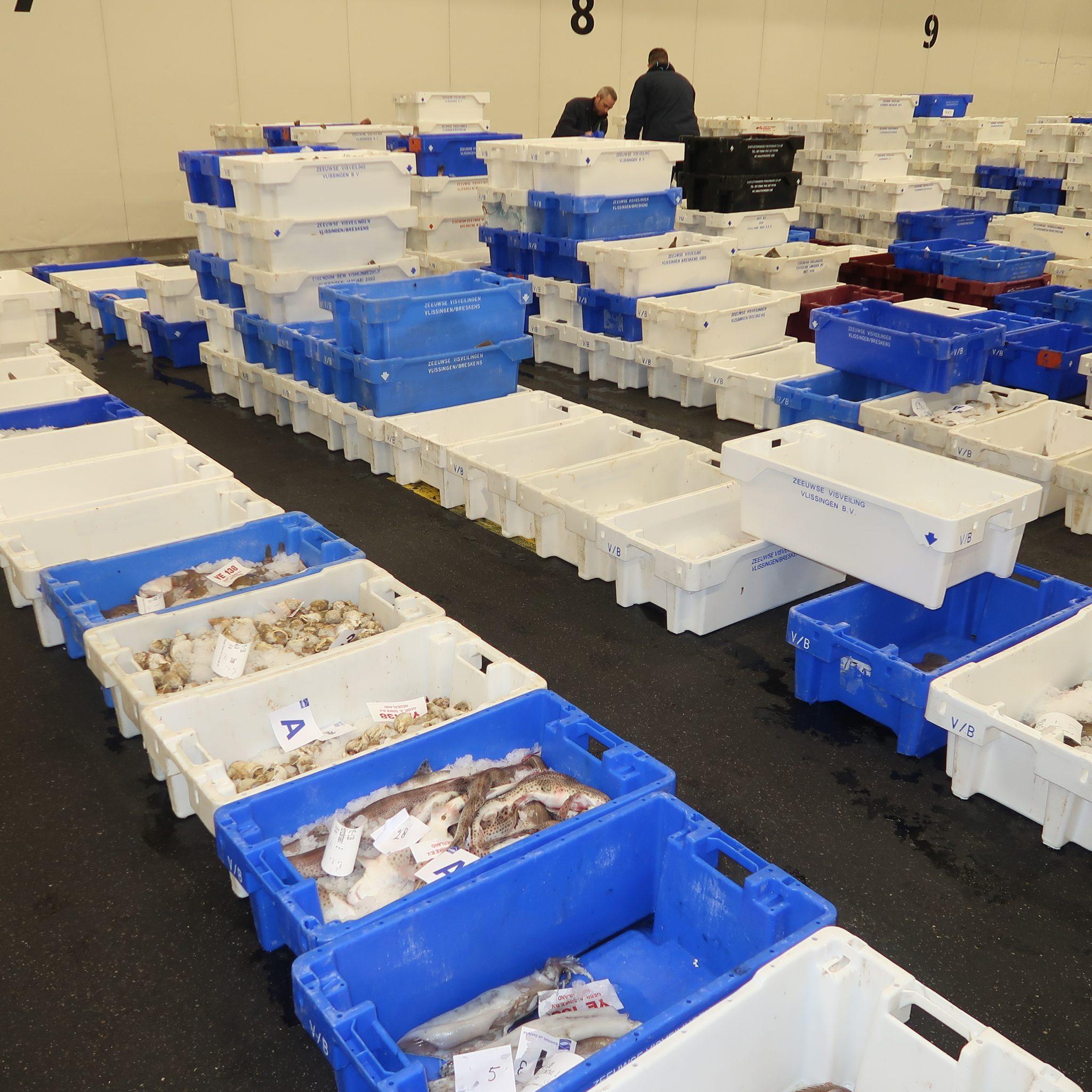 De vangsten van de kustvloot staan netjes gerangschikt in de vismijn van Vlissingen. (Foto W.M. den Heijer)