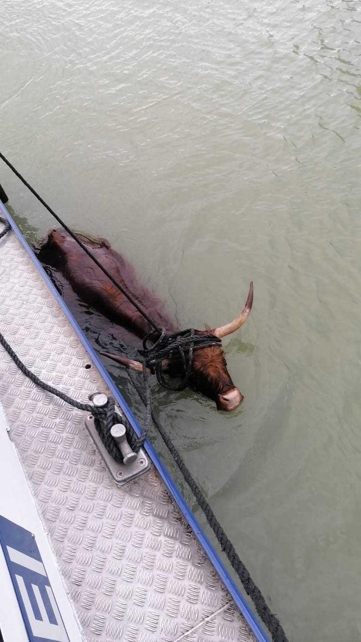 De Koe langszij de WSP-patrouilleboot uit Münster. (Foto Wasserschutzpolizei)
