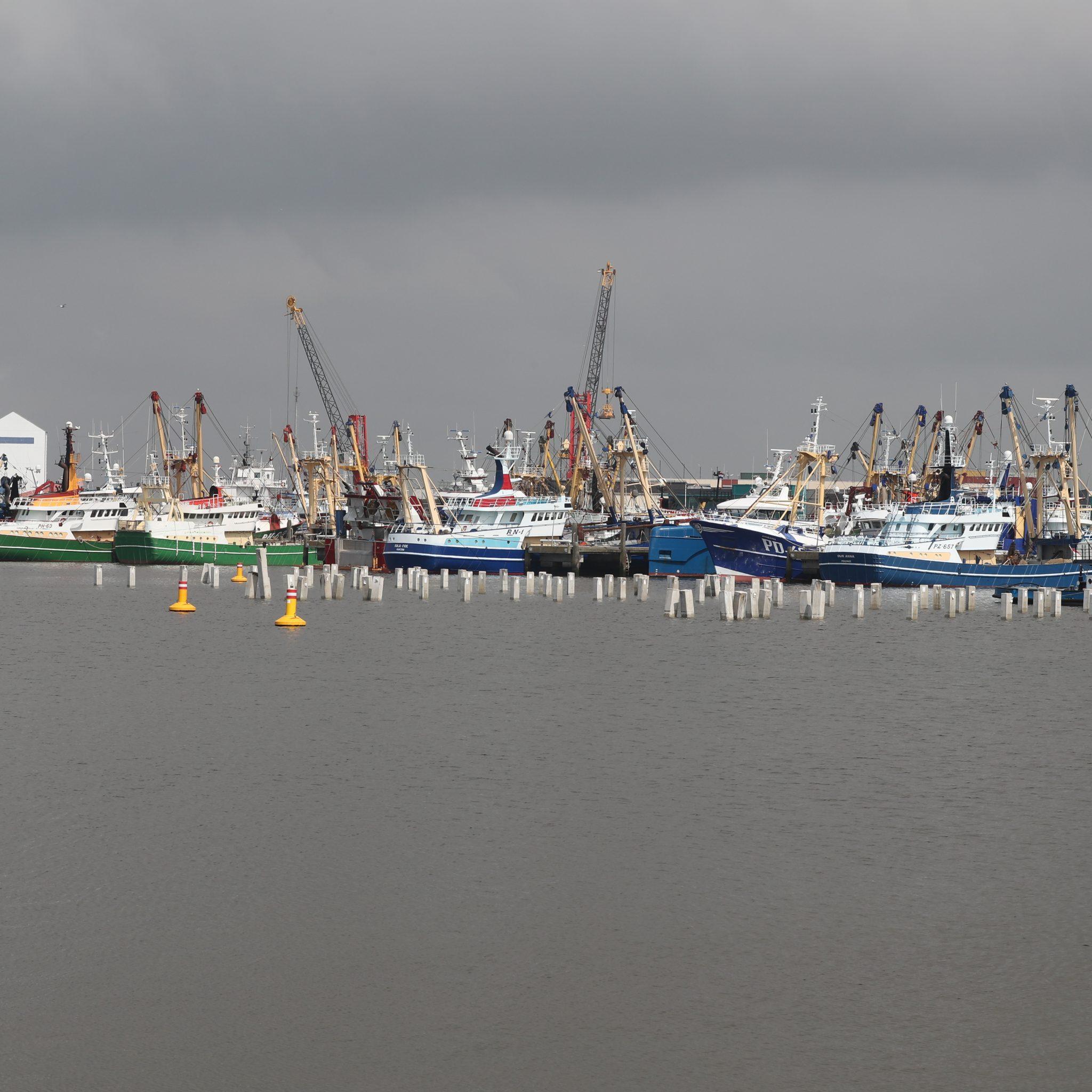 De betonnen palen in de Nieuwe Vissershaven zijn goed zichtbaar. (Foto Bram Pronk)