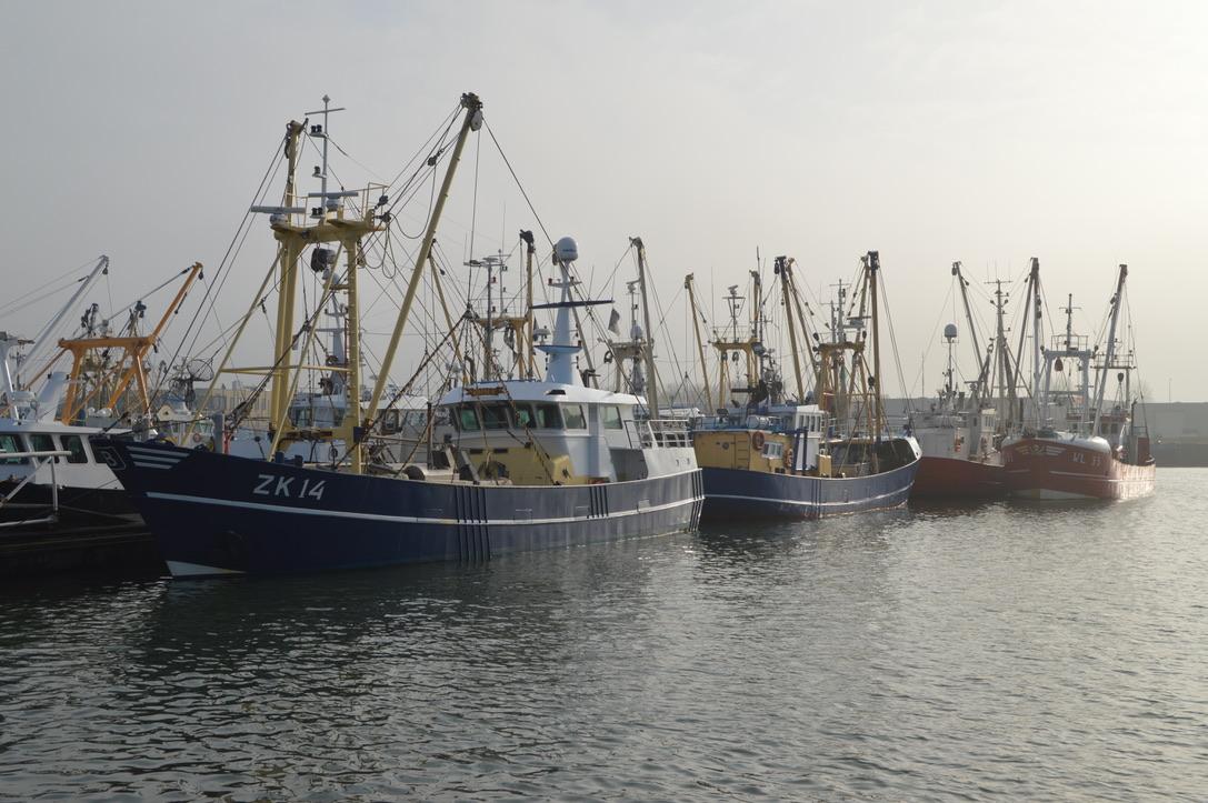 Garnalenvissers uit Zoutkamp kunnen worden uitgekocht. (Foto Nederlandse Vissersbond)