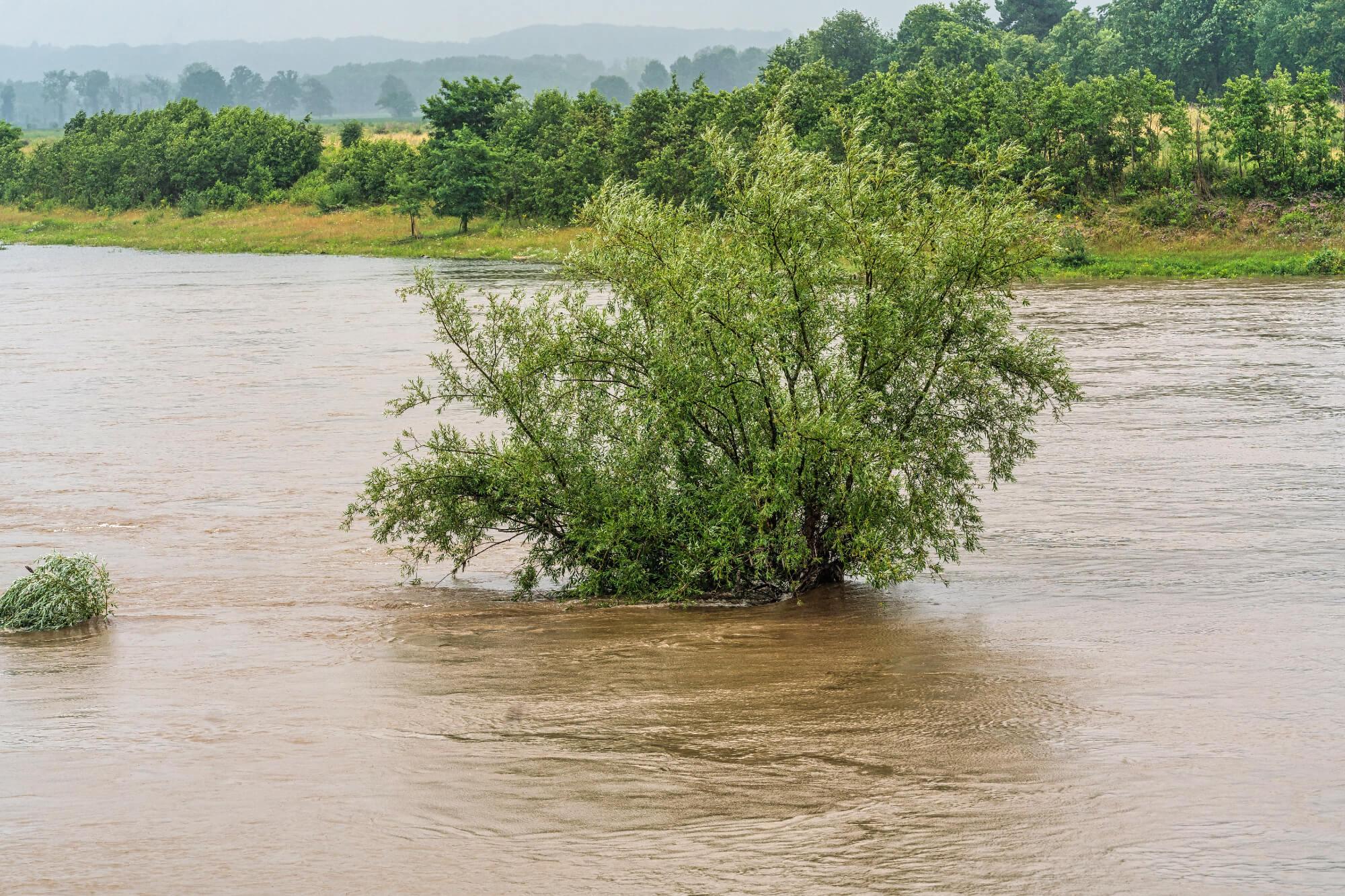 De waterstanden op de Maas en Rijn zijn extreem hoog. (Foto Rijkswaterstaat)