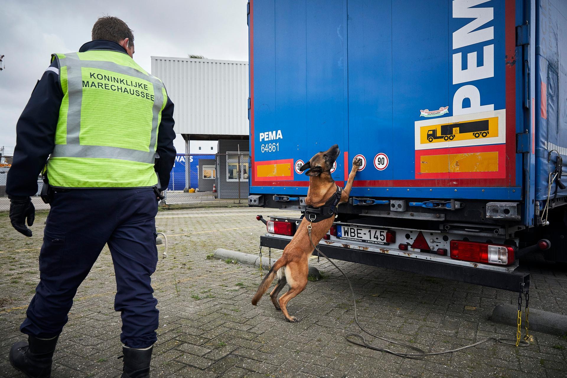 Een migratiehond werd gebruikt tijdens de actie. (Foto Twitter Koninklijke marechaussee)