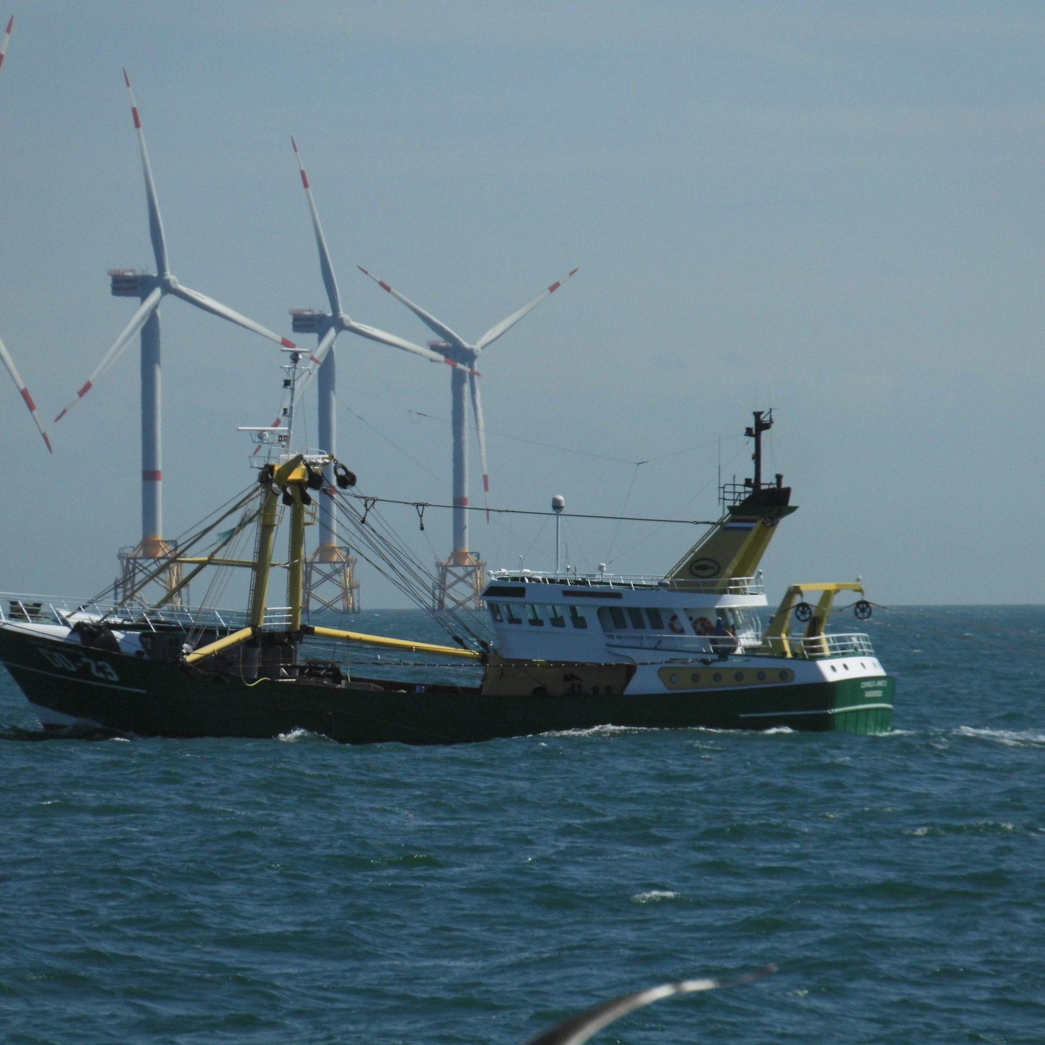 De kottervloot verliest op zee veel ruimte aan de aanleg van windparken. (Foto W.M. den Heijer)
