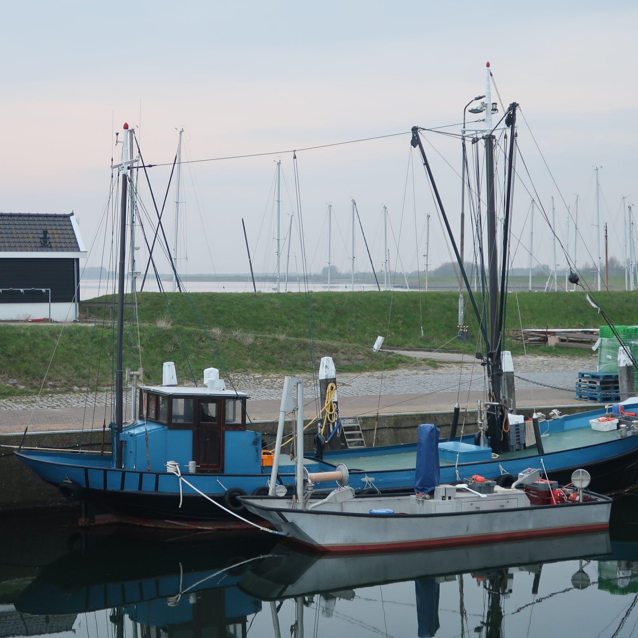 De OD-14, hier afgemeerd in de haven van Ouddorp, was een van de belangrijkste aanvoerders op Colijnsplaat. (Foto W.M. den Heijer)