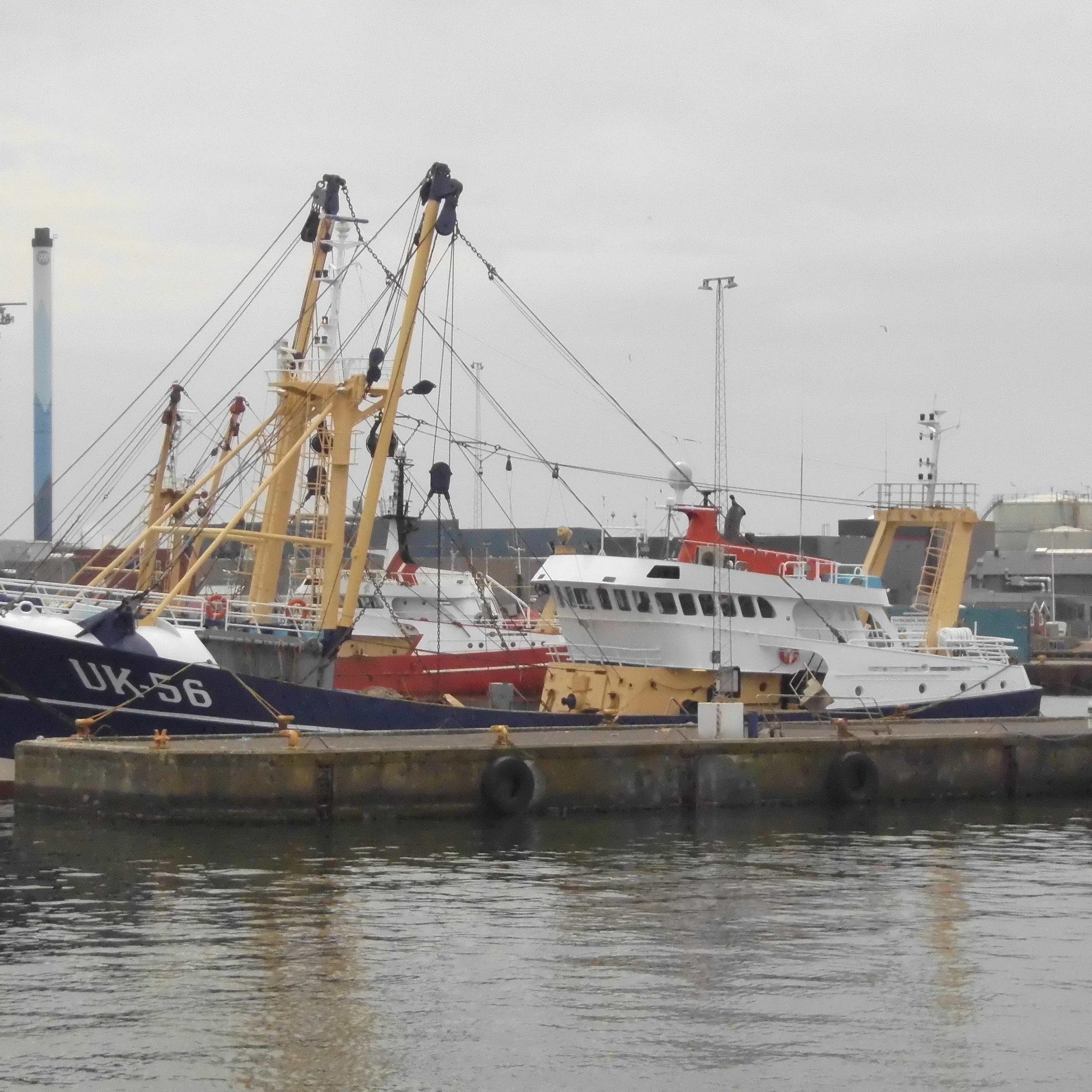 De bokker UK-56, met daarachter meerdere Hollandse boomkorkotters, in de haven van het Deense Thyborøn. (F0to W.M. den Heijer)