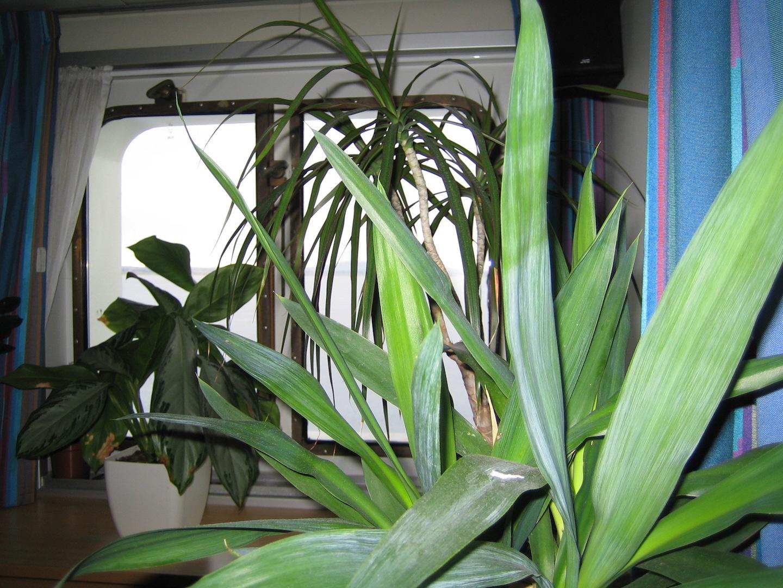In veel plantenbakken op zee 'groeien' plastic planten, maar er zijn ook scheepskoks met groene vingers.